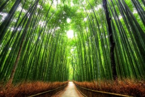 京都市や新