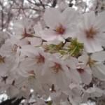 春だから動ける体づくり 織田編