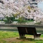 元安川 桜
